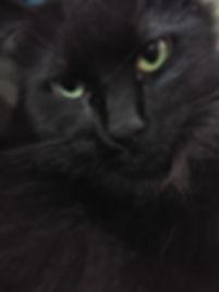 SAMI Close Up