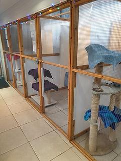 Indoor cattery.jpg