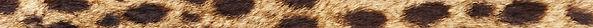 cheetah-fur-texture-1409405_edited.jpg