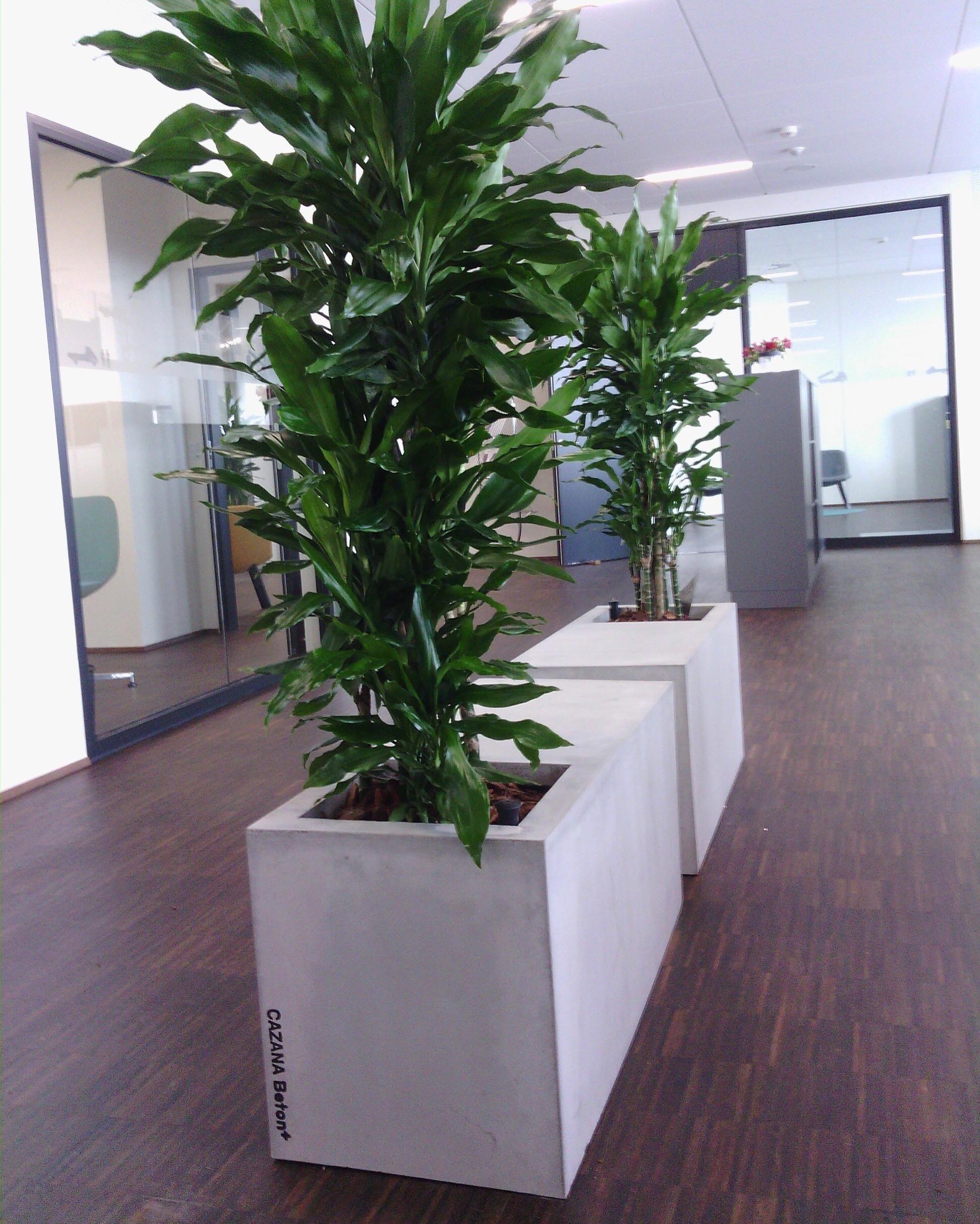 Plint med plantekumme