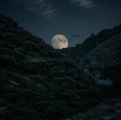 full-moon-landscape.jpg