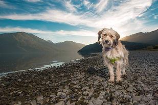 perros rescatados retrato