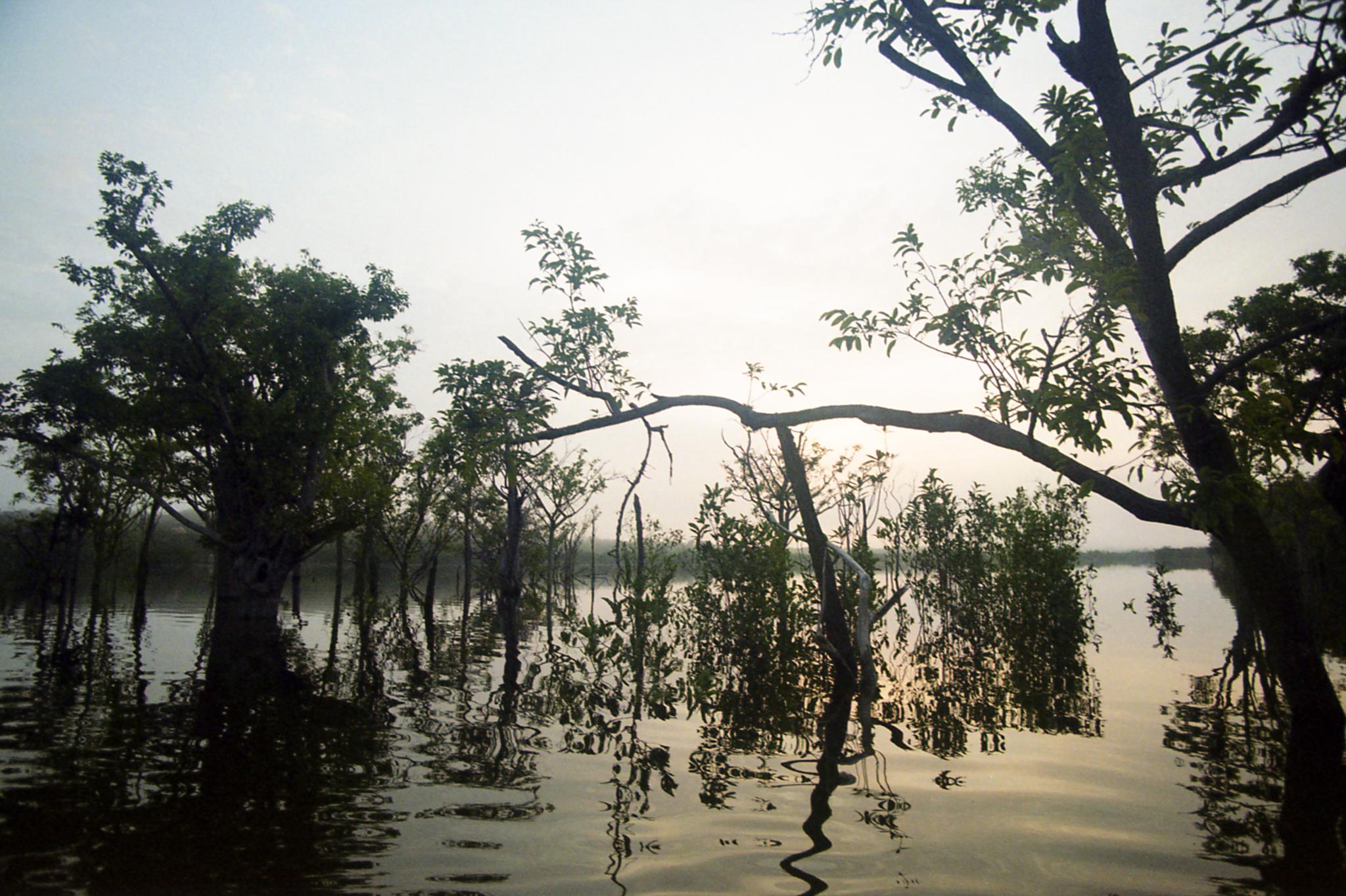 Amazona, Brasil