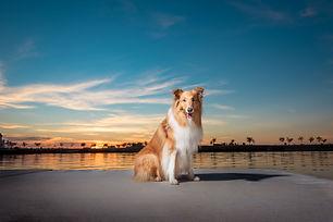 fotografía de mascotas en buenos aires