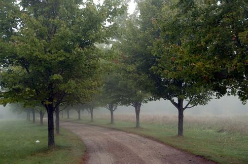 My Driveway in Fog