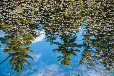 Inverted Trees on the Pond