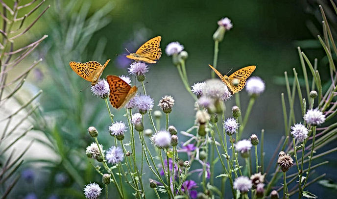papillon-home.jpg