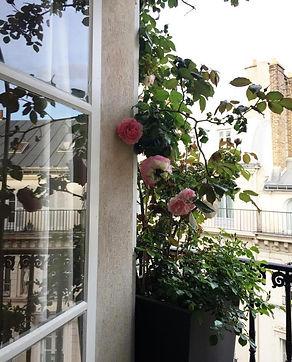 Rosier Pierre de Ronsard balcon