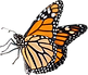 pngkit_butterfly-png_14732_edited.png