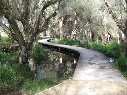 Boardwalk Beenyup Swamp