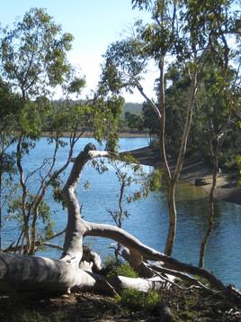 Glen Brook Dam