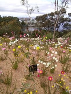 Kings Park Botanic Gardens