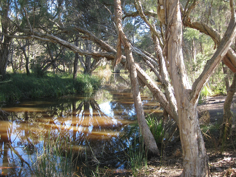 Mussel Pool Whiteman Park
