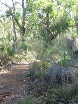 Portogabra Trail Mundaring