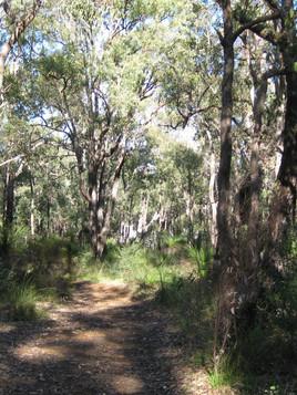 Carmel Trail