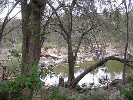 The Pilgrim Trail - Bells Rapids to Walyunga