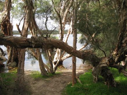 Yellagonga Regional Park