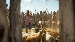 EU Aid film: Harvesting the Desert