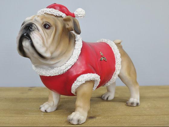 Charlie - The Christmas Bulldog