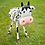Thumbnail: George - The Curly Cow