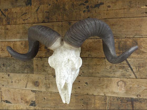 Ram's Skull Head