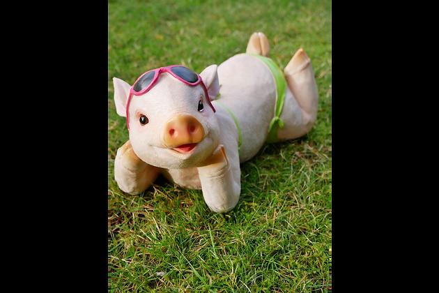Betty - The Sunbathing Pig