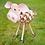 Thumbnail: Delilah - The Curly Piggy