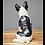 Thumbnail: Frenchie - The French Bulldog