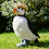 Thumbnail: Paul - The Puffin in Boots