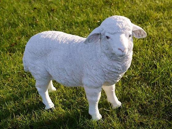 Sally - The Sheep