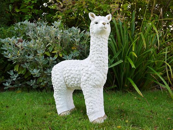 Benjamin - The Llama