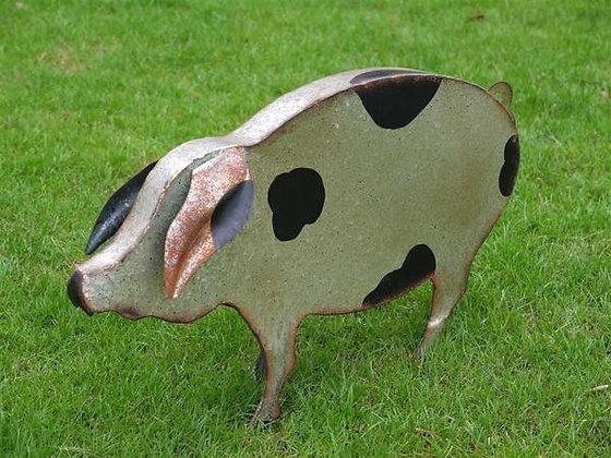 Spencer - The Spotty Pig