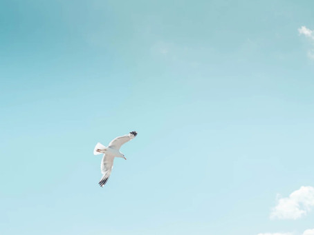 After Solving My Questions Of Life, I Became As Free As A Bird