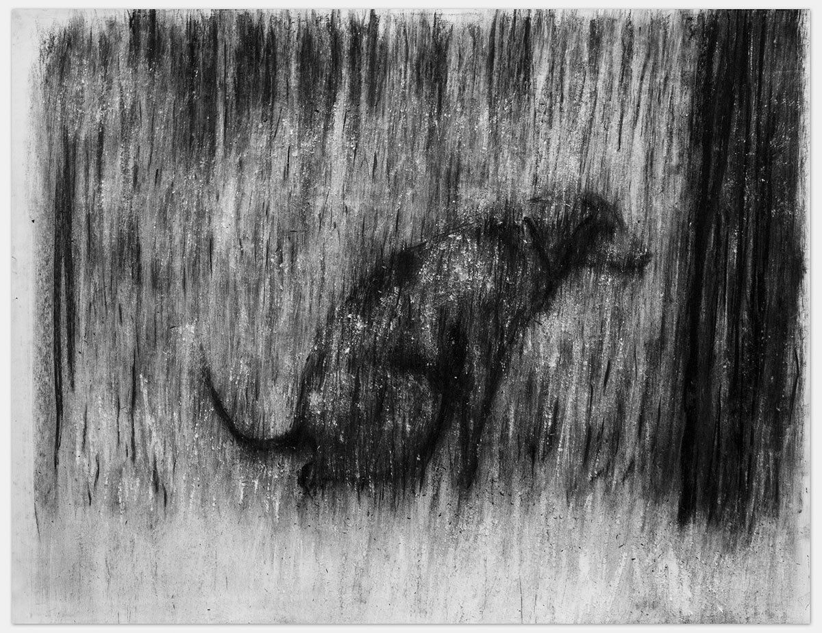 Johann Louw | Sittende Hond |  2014 | Charcoal and White Conté on Paper | 125 x 161 cm