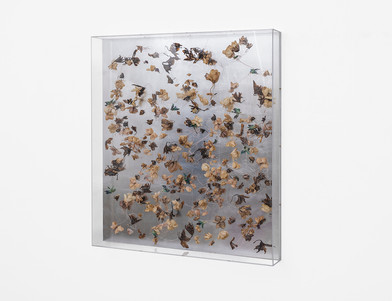 Pierre Vermeulen | Dried orchid box no. 1 | 2018 | Orchids, Shellac, Cotton on Aluminium and Perspex | 106 x 96 x 13.5 cm