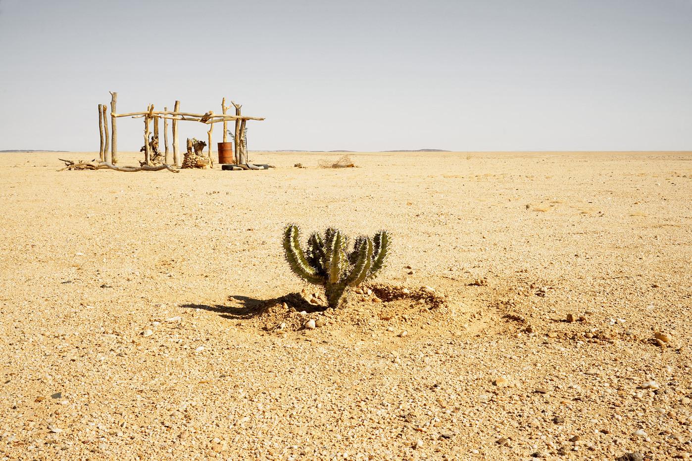 "Margaret Courtney-Clarke | ""Poison Tree"" (Euphorbia Virosa), D1918, Erongo Region, Namibia, July, 2018 | 2018 | Giclée Print on Hahnemühle PhotoRag | 34 x 50.5 cm | Edition of 6 + 2 AP"