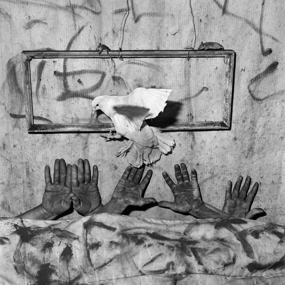 Roger Ballen   Five Hands   2006   Archival Pigment Print   90 x 90 cm   Edition of 10