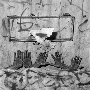 Roger Ballen | Five Hands | 2006 | Archival Pigment Print | 90 x 90 cm | Edition of 10