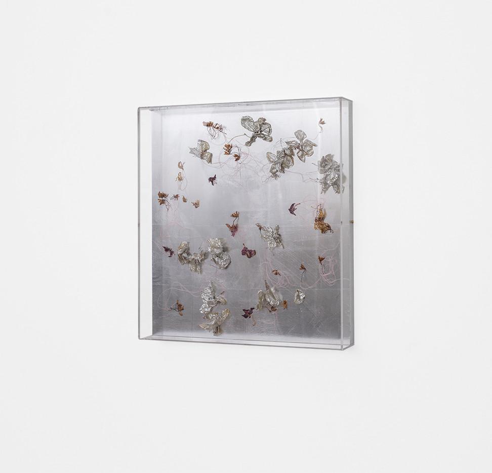 Pierre Vermeulen | Dried orchid box no. 3, mirror | 2018 | Orchids, Shellac, Cotton on Aluminium and Perspex | 53 x 48 x 8.5 cm