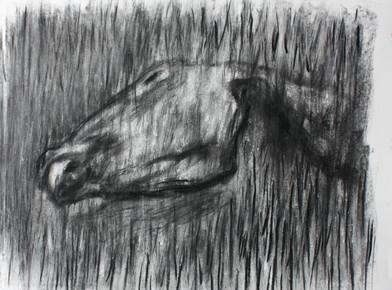 Johann Louw | Perdekop | 2013 | Charcoal on Paper | 70 x 100 cm