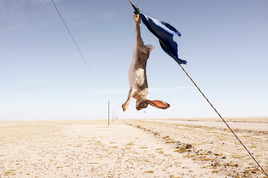 Margaret Courtney-Clarke | An African hare hangs from a cable, Dorob National Park, 7 July 2014 | 2014 | Giclée Print on Hahnemühle Photo Rag Paper | 74.5 x 112 cm | Edition of 6 + 2 AP