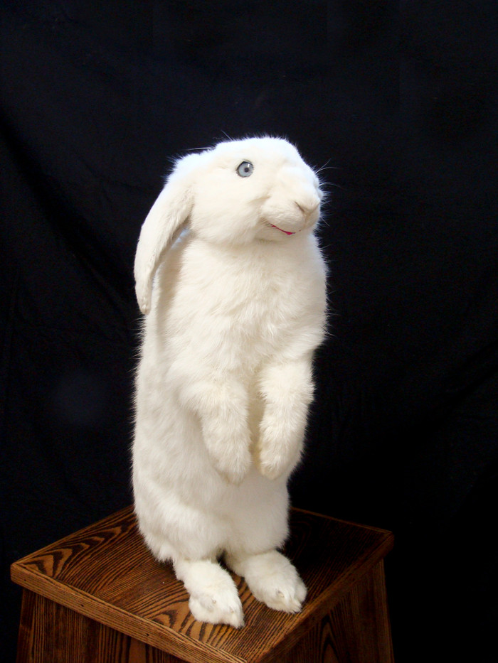 Ed Young   Candy Yum Yum   2013   Taxidermied Rabbit. Oryctolagus Cuniculus – New Zealand White Rabbit   52 cm