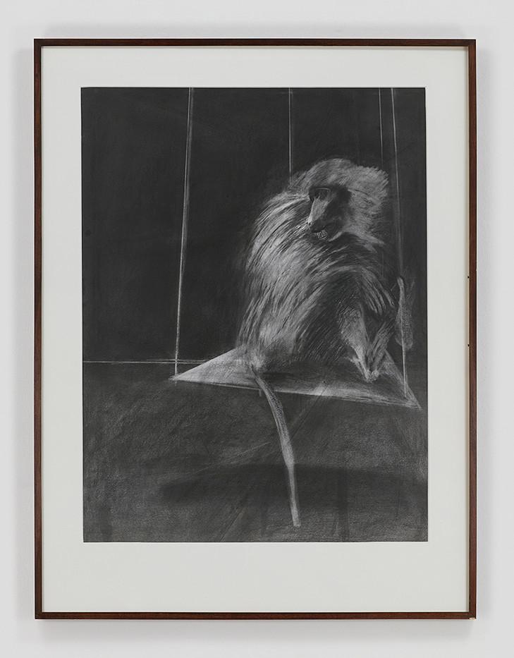 Albert Adams | Ape | 1979 | Pencil, Graphite on Paper | 122 x 93 cm