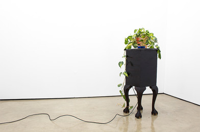 Miranda Moss | Although they didn't come in peace at least they brought some nice things, thanks but no thanks. I'm trying to quit | 2016 | Pacific Breeze Cigarettes, Devils Ivy / Money Plant, Mist, Pine, Imbuia Wood and Nail Polish | 120 x 32 x 32 cm