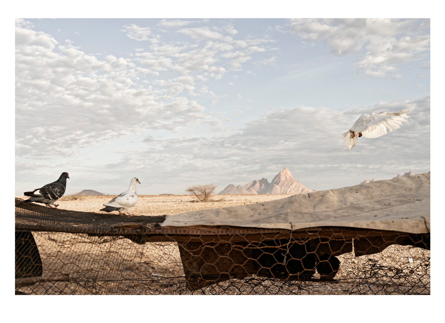 Margaret Courtney-Clarke | Black Ranch, Pos #3, Spitzkoppe, 25 December 2017 | 2017 | Giclée Print on Hahnemühle Photo Rag Paper | 49.5 x 74 cm | Edition of 6 + 2 AP