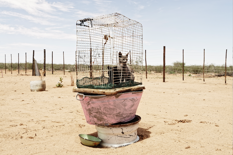 Margaret Courtney-Clarke | Caged Cats, Axab Pan Kalahari, Namibia | Giclée Print on Photo Rag Baryta Paper | 50 x 75 cm | Edition of 6 + 2 AP