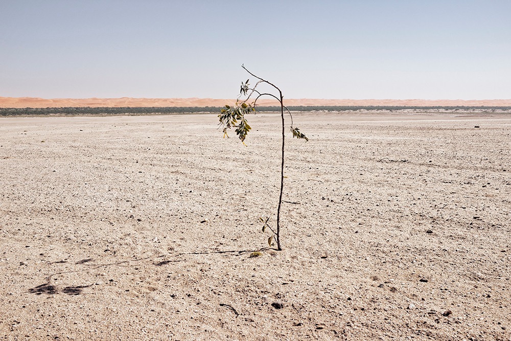 Margaret Courtney-Clarke | The flowering wild tobacco (Nicotiana glauca), Walvis Bay District, 9 June 2014 | 2014 | Giclée Print on Hahnemühle Photo Rag Paper | 55.5 x 84 cm | Edition of 6 + 2 AP