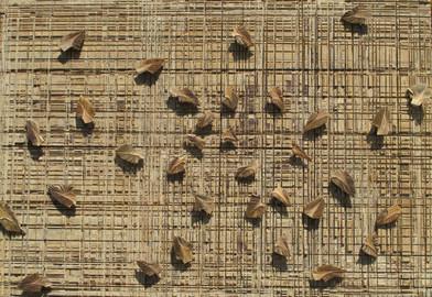 Willem Boshoff   Inklings   2013   Wooden Cutting Block and Palm (Washingtonia robusta) Cuttings   122.5 x 165.5 cm