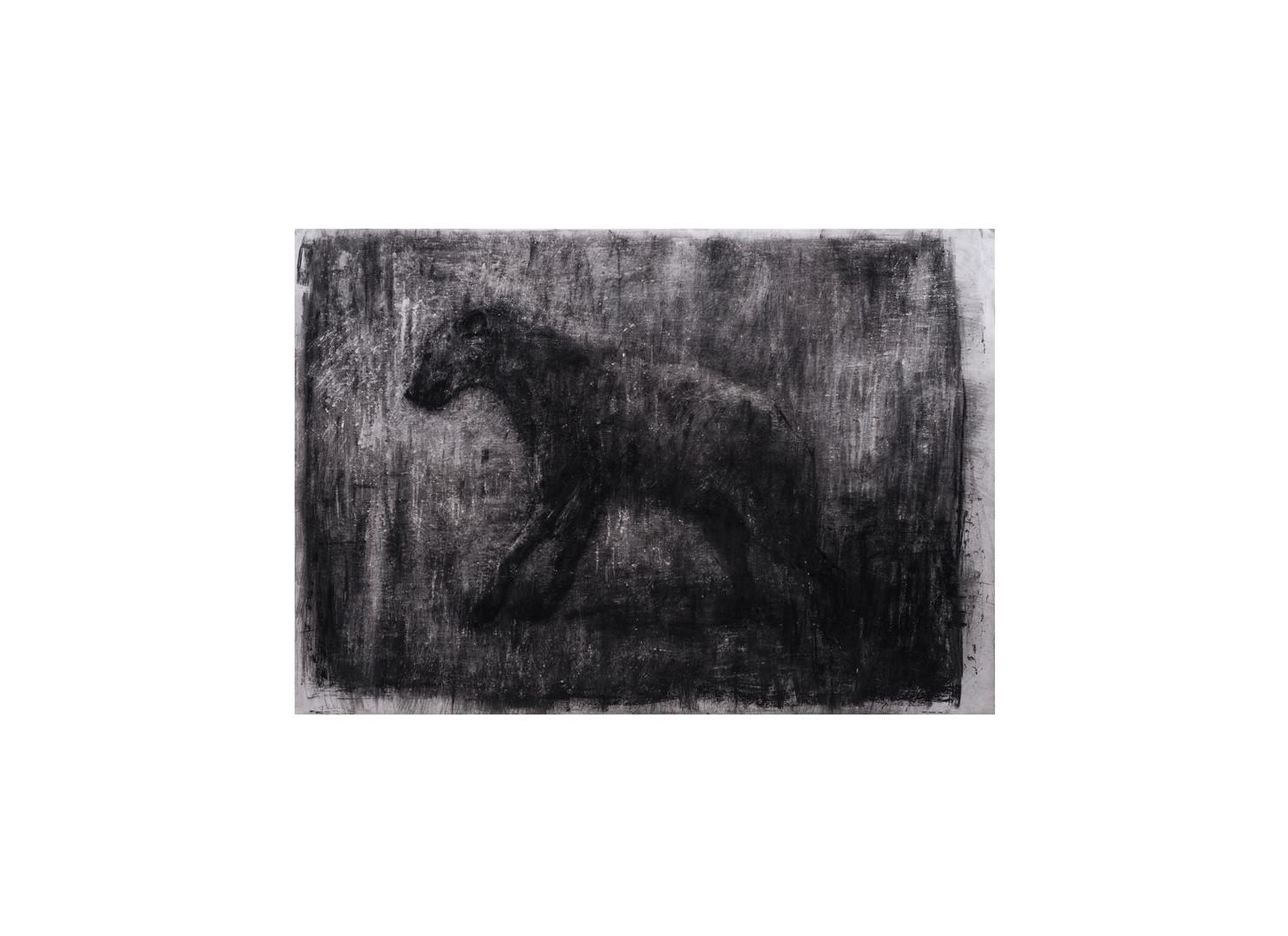 Johann Louw | Groot Hiëna | 2017 | Charcoal on Hahnemühle | 124 x 175 cm