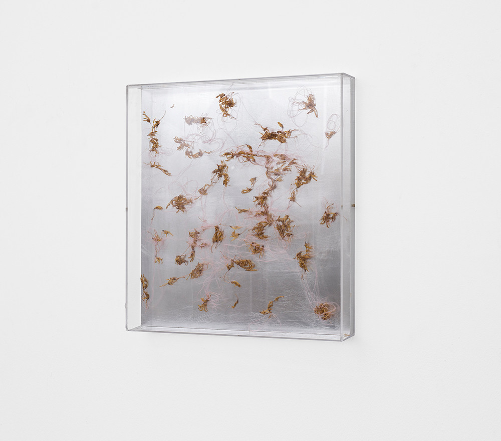 Pierre Vermeulen | Dried orchid box no. 2, yellow | 2018 | Orchids, Shellac, Cotton on Aluminium and Perspex | 53 x 48 x 8.5 cm